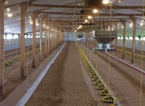 Poultry house Retro Fit and Refurbishment